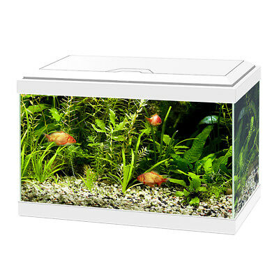 ASKOLL ACQUARIO CIANO 20 LIGHT WHITE BIANCO 17 LITRI COMPLETO ACCESSORIATO LED